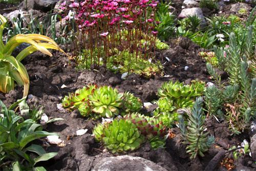 Фото альпийская горка на даче какие растения нужны
