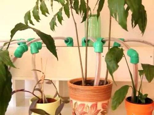 Автополив комнатных растений из медицинских капельниц
