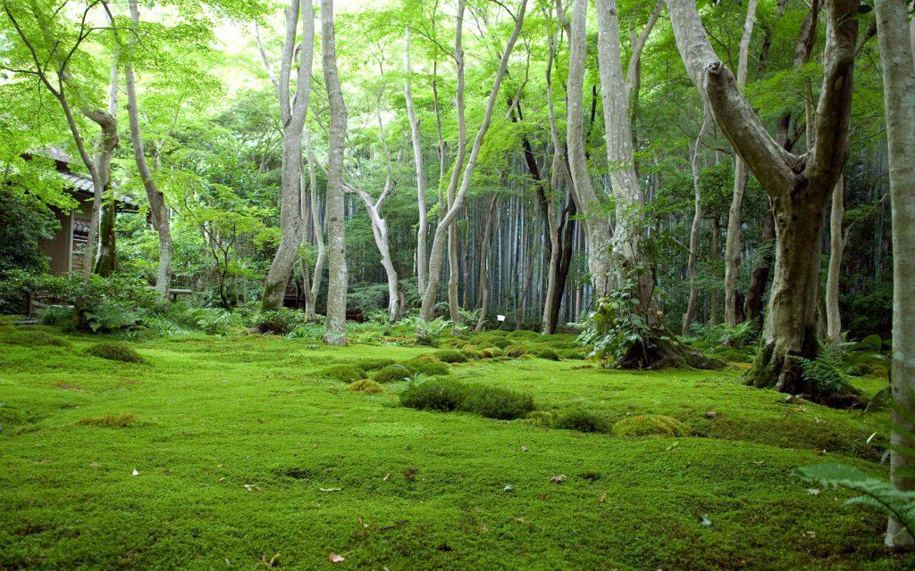 Лесной ландшафт